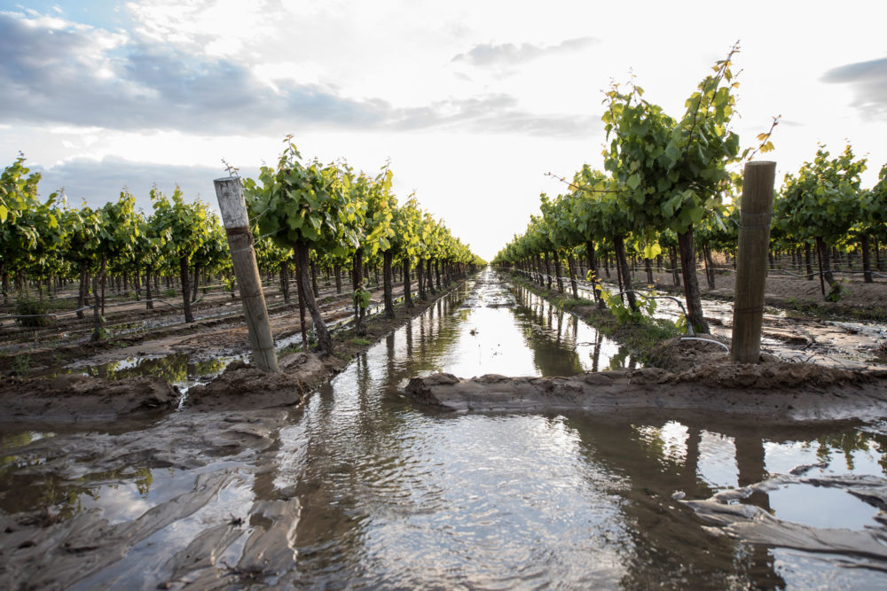 Sustainable-Conservation-flooded-farm