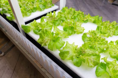 Necessity is driving vertical food farm research.