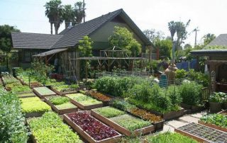 -home-organic-farming-raised-beds