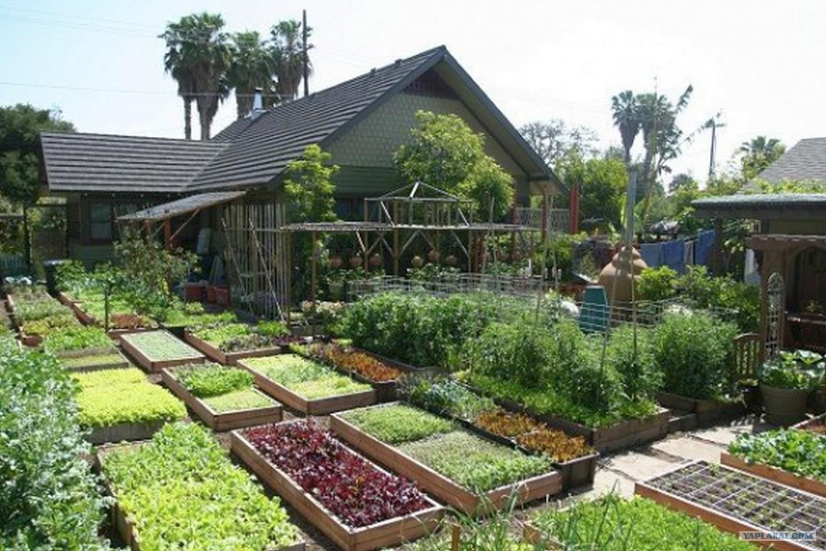 -home-organic-farming-raised-beds